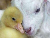 Animals Magnificent Creation