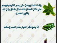 Pin By Sada Roo7e On معلومات طبيه Food Healthy Recipes Healthy