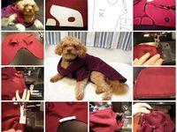 Pets craft ideas