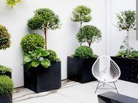 Jardín y ambiente