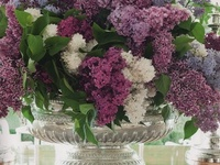 Lilacs, my very favorite of all flowers.