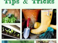 Tips on how to make your garden grow