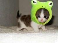 Cute Animals!!!!