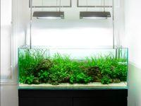 ... images about Aquarium/Vivarium on Pinterest Cichlids, Plants and Aga