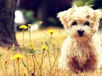 Animals = LOVE