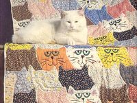 Cats and quilts....Beautiful!