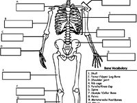1000 images about pilates study on pinterest human skeleton worksheets and human anatomy and. Black Bedroom Furniture Sets. Home Design Ideas