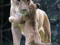 God's beautiful creatures