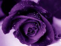 ♥ Color Me Purple ♥