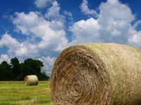 Hay Bale's