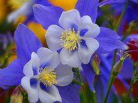 Flores & flores