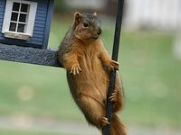 Stop acting so squirrely ...