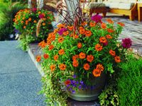 Gardening: Containers <3