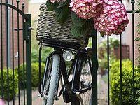 Pedals and petals...