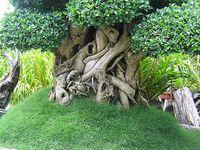 Wee Trees