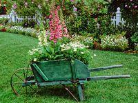 flowers--garden
