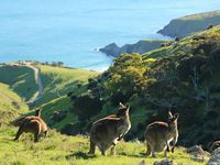 Hills and Valleys of McLaren Vale / The McLaren Vale region is home to hills, valleys and beaches. Stunning scenery and wide open skies combine to create a breath taking tourist destination, one South Australia can proudly claim as world famous.