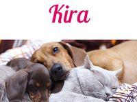Die Schonsten Namen Fur Haustiere Katzen Namen Katzennamen Und Haustiere
