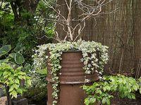 Trädgård Svea