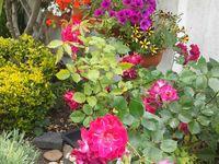 o meu  jardim