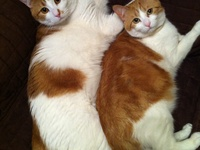 Sammy, Tammy, and Other Cute/Beautiful Animals