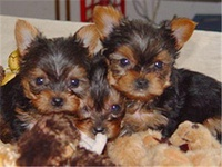 The pups!