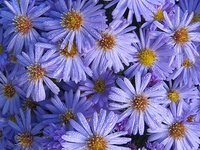 I love flowers...all flowers ! I wish I lived where I could have thm all !!