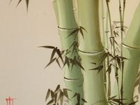 I love everything about bamboo.