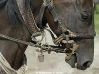 Paardrijden / Vakantie in Hongarije betekent voor de paardenliefhebber het ultieme!!! Ook voor uw paardrijvakantie. www.ten2tenreizen.nl