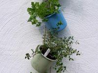 gardening/outdoor ideas
