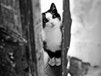 Chats Et Chatons! Cats