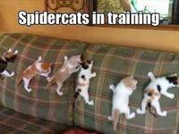 Cat humor :)