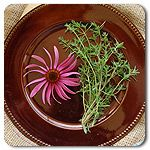 Cricklewood Herb Garden