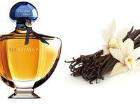 perfumes e aromas