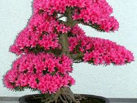 6. Bonsai World...Mini beauty awesome !...collection from all around the world.