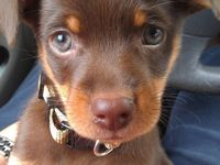 adorable doggies and other small cute furry babies * )