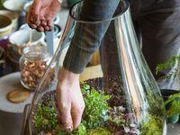 Garden Inspiration - indoor & for the yard