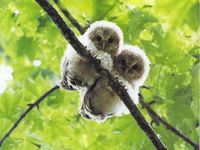 Animals Bird Owl / Uil