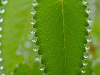 Nature Photos / cool real things