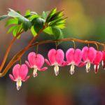 Лучших изображений доски «Цветы»: 223 в 2019 г. | Plantas ...