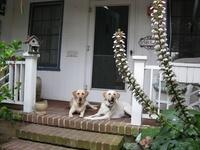 Love Of Labradors