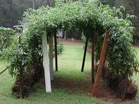 Straw Bale Garden!