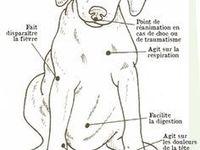 Truc et astuces pour chien
