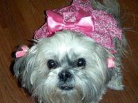 I LOVE DOGS!! I HAVE 3 SHIH TZU'S AND A POMERANAN! LOVE LOVE LOVE EM!❤