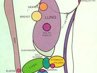 Reflexology and pressure points!