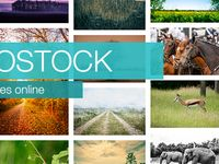 Microstock / Microstock news and trends