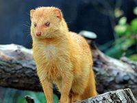 Animal Alphabet - M / M for Manatee, Mara, Meerkat, Mink, Mole, Mongoose, Monkey, Moose, Mouse, Muskrat