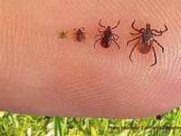 How To Get Rid Of Ticks Outdoors Naturally