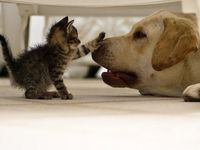 Animals that might or might not make you go awwwww!!!