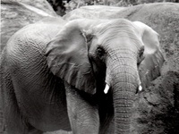 Elephants are my totems... I know somewhere in my past I was close to elephants and worked with them.  LOVE ELEPHANTS.